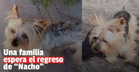 Buscan a Nacho, la mascota de una mujer que está enferma