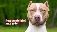 Ya se registraron más de 500 perros potencialmente peligrosos