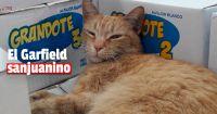 Conocé al gatito guardián que vive en un supermercado de Santa Lucía