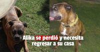 Una periodista sanjuanina pide ayuda por las redes sociales para encontrar a su perro